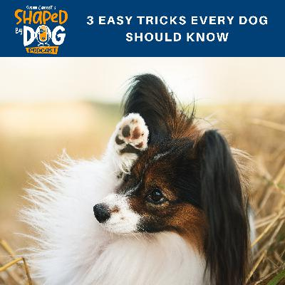 3 Easy Tricks Every Dog Should Know