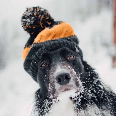 584 - Como falar sobre o frio em inglês!