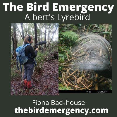 045 Albert's Lyrebird with Fiona Backhouse