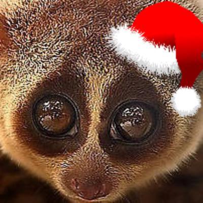 Ep 43: The Christmas Howler Monkey Episode