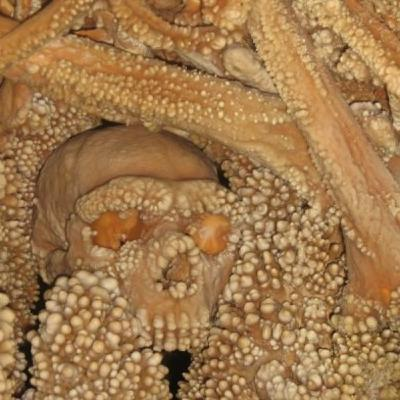 243 - Rep. Evolución Humana 3: Homo Ergaster, Homo Antecessor, Homo Heidelberguensis