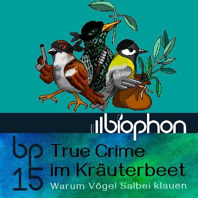 bp15: True Crime im Kräuterbeet - Warum Vögel Salbei klauen