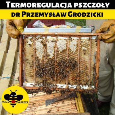 Termoregulacja pszczoły - dr Przemysław Grodzicki - 1/2