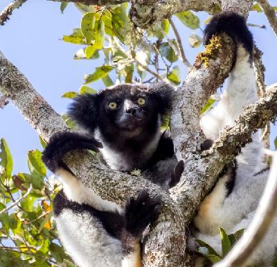 Lemur love and award-winning plant passion in Madagascar