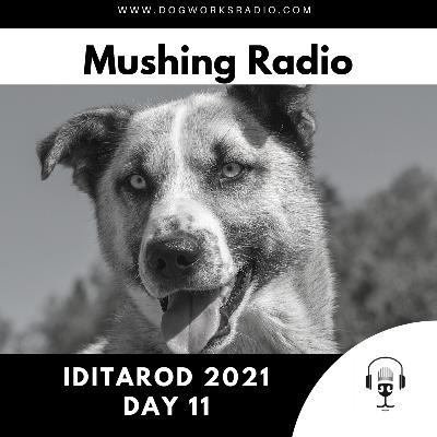 Iditarod 2021 Daily Coverage | Day 11
