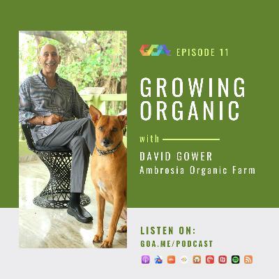 Growing organic with David Gower of Ambrosia Organic Farm   Episode 11