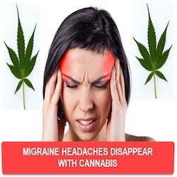 YDI-190605_Call from Robert about CBD:CTFO and Bob about migraines