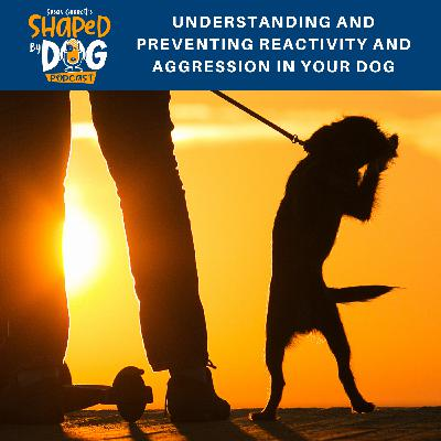 Understanding and Preventing Reactivity and Aggression in Your Dog