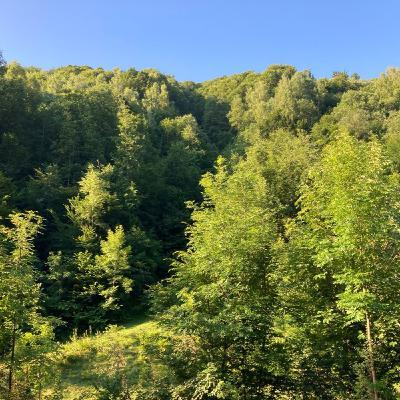 Romania day 1 - Forestpod