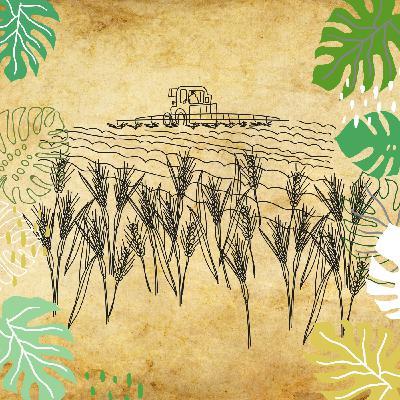 Une agriculture sans pesticides est-elle rentable ?