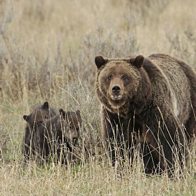 Bear News: An interview with Chris Morgan