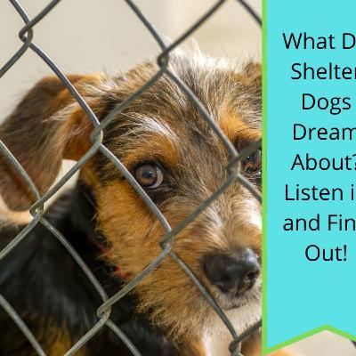 Shelter Dreaming