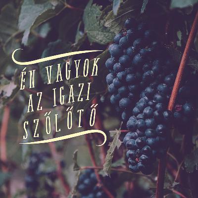 Én vagyok az igazi szőlőtő - János 15:1-8