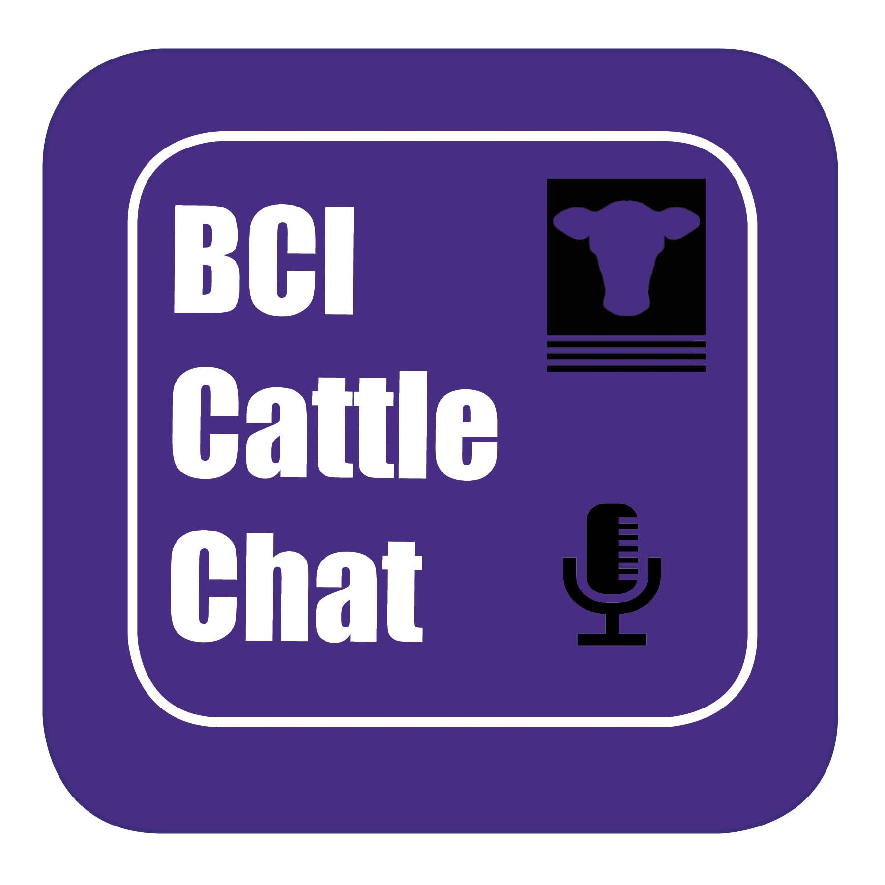 BCI Cattle Chat - Episode 12