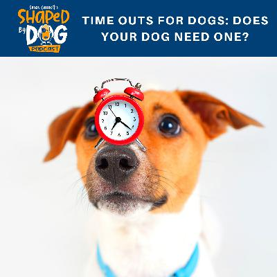 Time Outs for Dogs: Does Your Dog Need One?