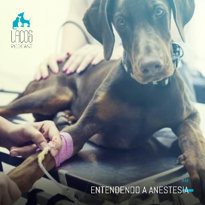 #44: Entendendo a Anestesia