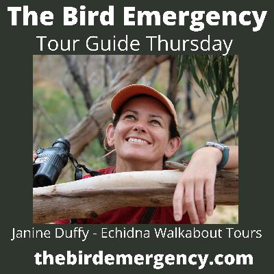 035 Tour Guide Thursday with Janine Duffy - Echidna Walkabout Tours