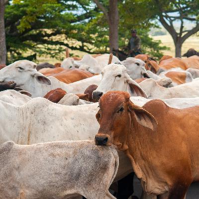 'Agronegócio continua funcionando', diz secretário de Abastecimento de SP