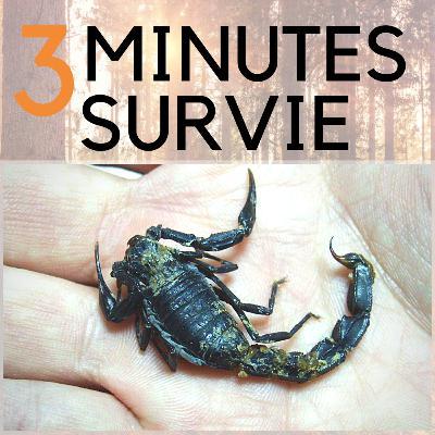 🦂 Comment survivre à une piqûre de scorpion