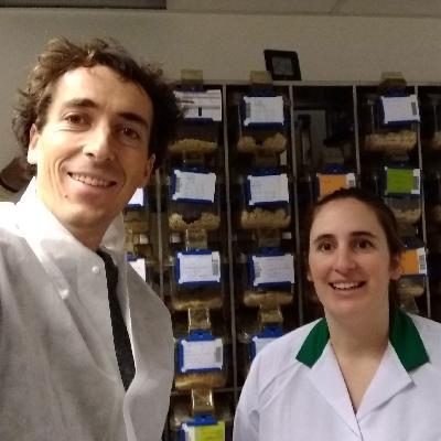 Is biomedisch onderzoek zonder dierproeven mogelijk?
