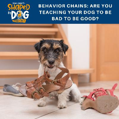 Behavior Chains: Are You Teaching Your Dog to be Bad to be Good?