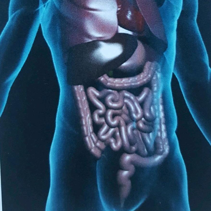 1. Le Tube Digestif Gardien de votre Santé