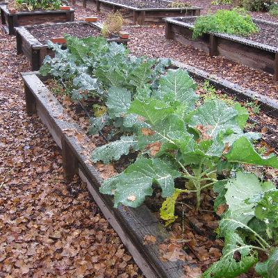 043 Veggies for Fall