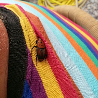 Red Bugs and Palm Trees in Montenegro | The Balkan Adventures Podcast