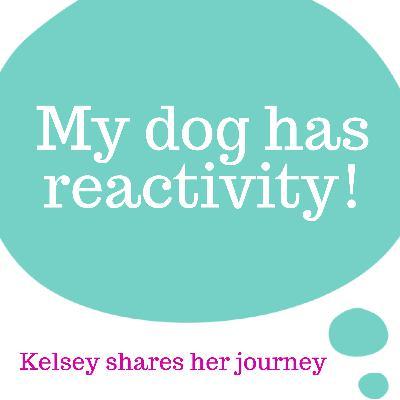 Dog Reactivity: Kelsey's Journey