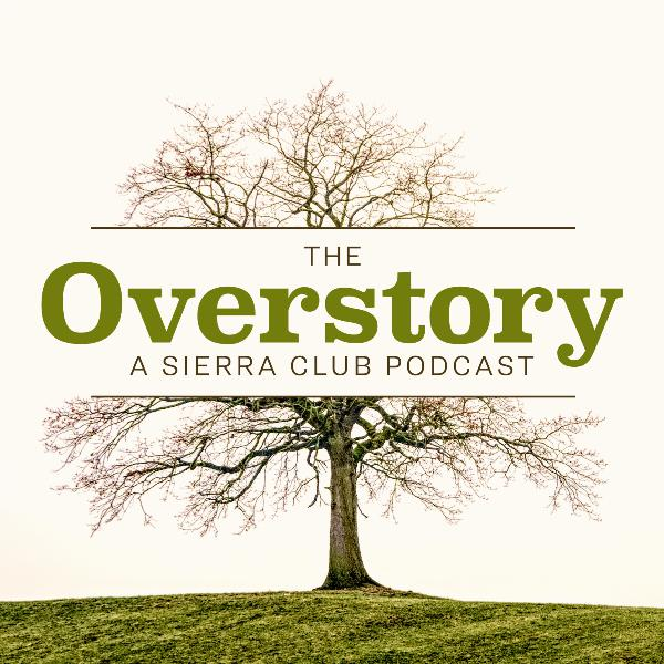 The Overstory: Coming Soon!