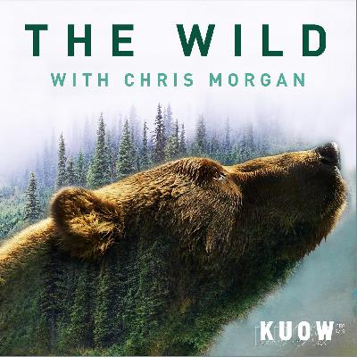 The Wild with Chris Morgan (special episode)