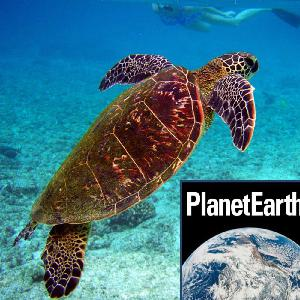 Tidal energy, turtle mating habits - Planet Earth Podcast - 13.03.12