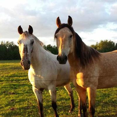 When Two.horses Came to Church