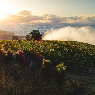 Stonestreet Estate Vineyards Dives into the Winemaking Process of Mountain Grown Chardonnay