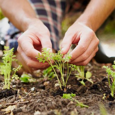 Useful Tips for Organic Gardening