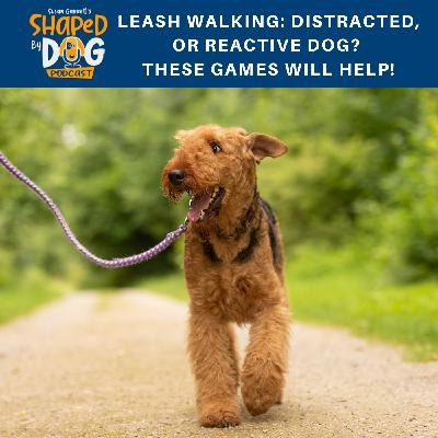 Leash Walking: Distracted, or Reactive Dog? These Games Will Help!