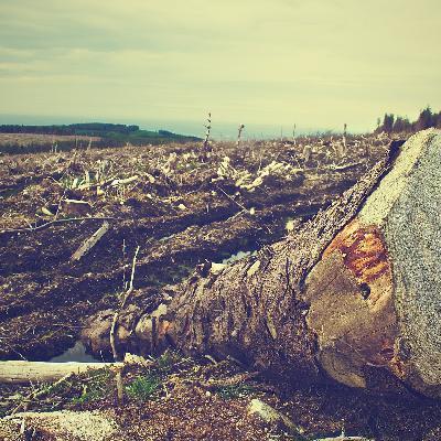'Ferocidade que a natureza mostra está relacionada ao modo como somos ferozes com ela'