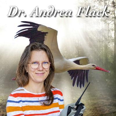 Wunderbare Weißstörche - Dr. Andrea Flack