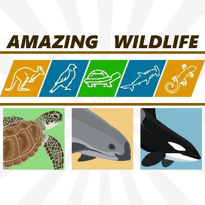 Sea Turtles | Vaquita | Killer Whale