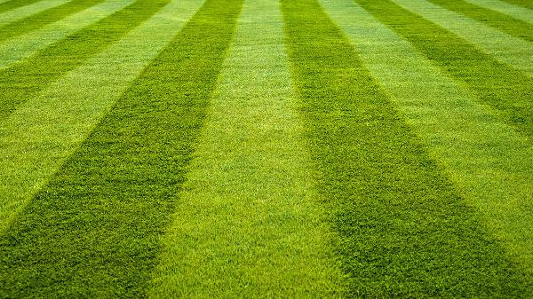 What we can learn from a cluster of people with an inherited intellectual disability, and questioning how sustainable green lawns are in dry places