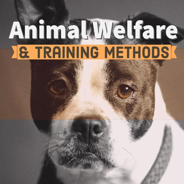 Animal Welfare and Training Methods