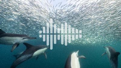 Potty training cows, and sardines swimming into an ecological trap