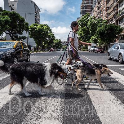 Buenos Aires   Paseador de perros di Alida Vanni