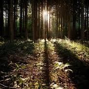 Stunning Nature & Calm Music