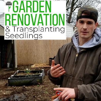Garden Renovation, Transplanting Seedlings & Morning Pages Creativity Flow