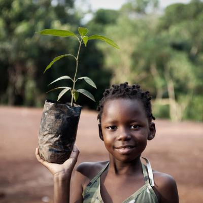 Planting trees in Africa with a focus on hunter-gathers & elephant conservation.