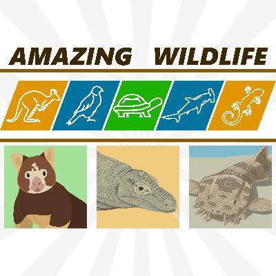 Tree Kangaroos | Komodo Dragon | Wobbegongs