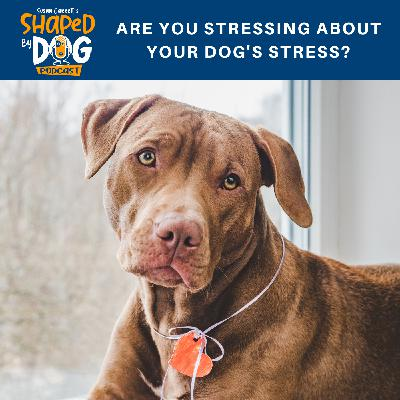 Are You Stressing About Your Dog's Stress?