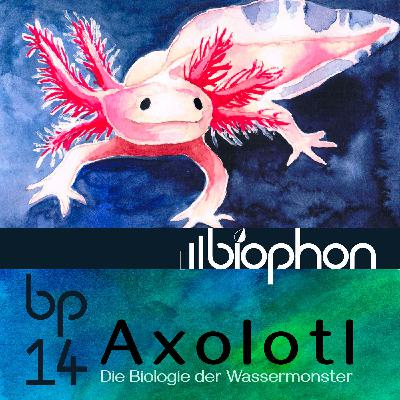 bp14: Axolotl - Die Biologie der Wassermonster