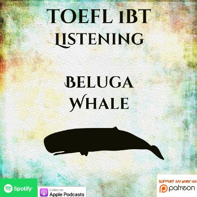TOEFL iBT | Listening | Lecture | Beluga Whale